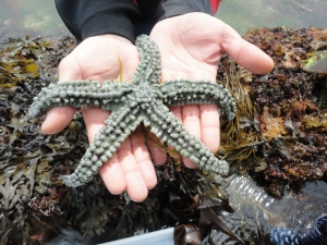 A spiny starfish