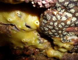 Sponge and sea squirts