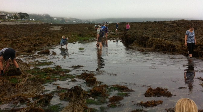 Join the search – Help monitor our Cornish Rock Pools