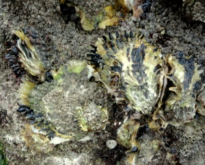 Oysters at Trevignon, Brittany.