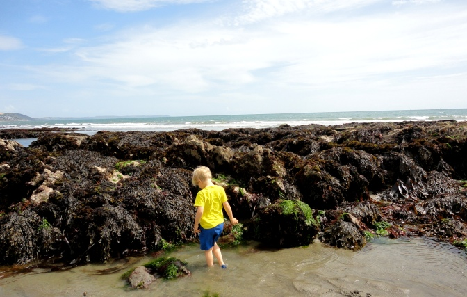What will you find in the rock pools?