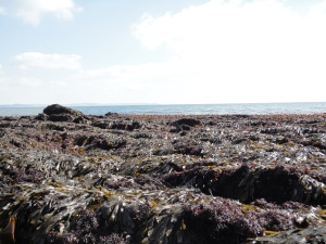 Hannafore at low tide