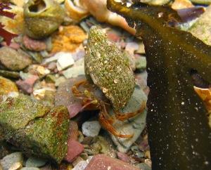 Other half's hermit crab