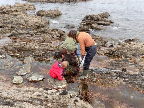 Just one more rock... exploring the Cornish rock pools