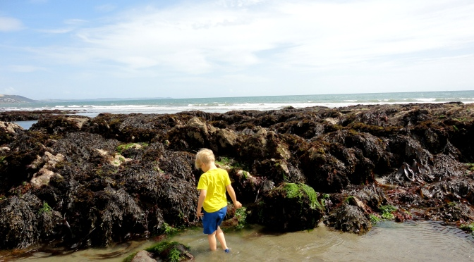 Rock Pooling and Marine Events in Cornwall this Summer