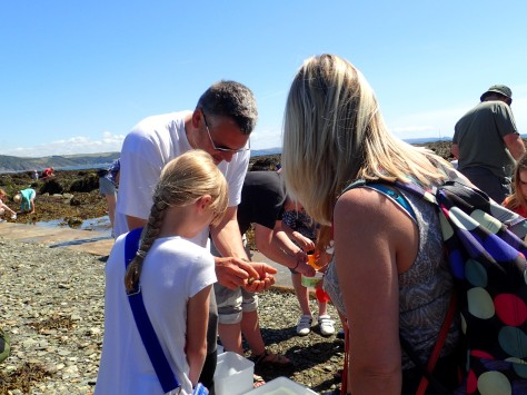 Learning about crabs with a Looe Marine Conservation Group volunteer