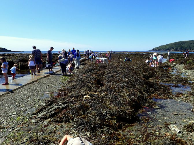 A perfect rockpool ramble in Looe