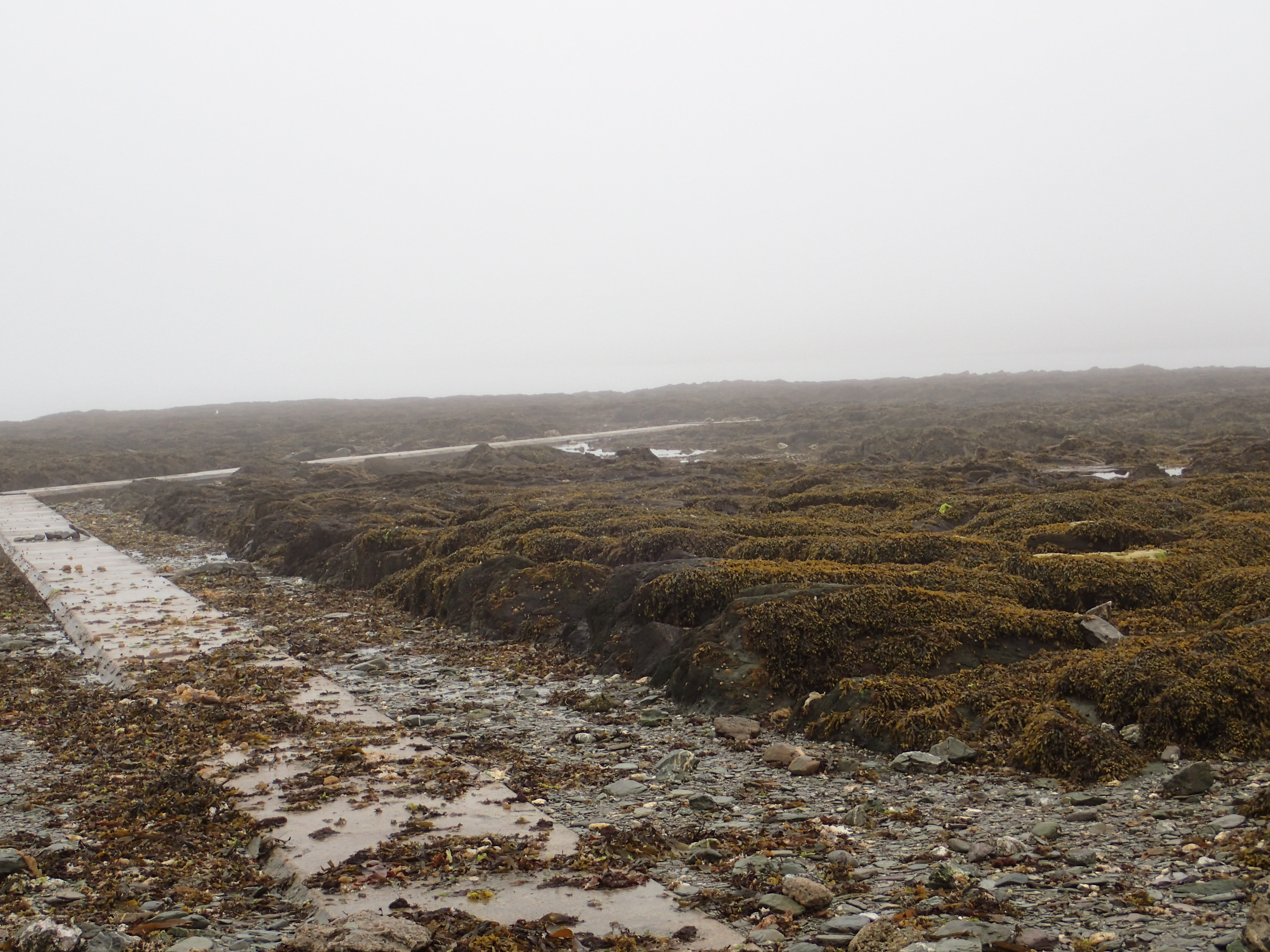 The fog has descended at Hannafore - Looe Island is nowhere to be seen.
