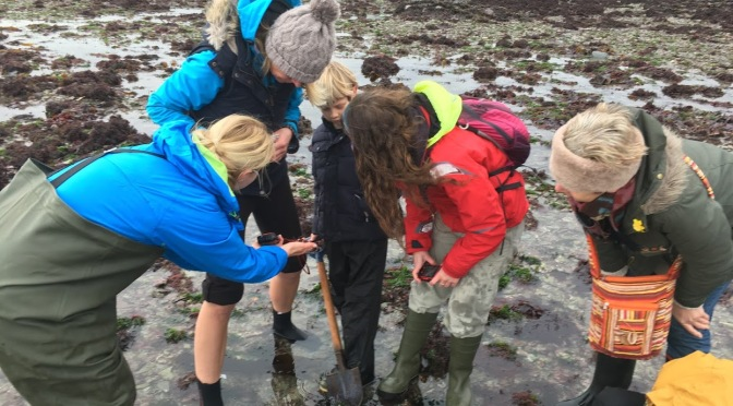 Christmas Rockpooling in Looe