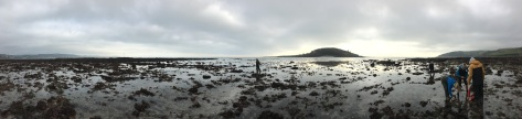Our Stalked jellyfish survey at Hannafore Beach, West Looe