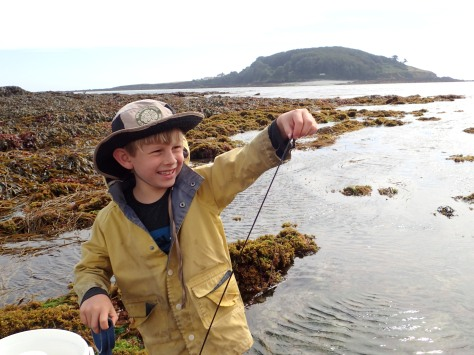 Cornish Rock Pools Junior meets a bootlace worm