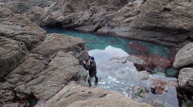 Richard Pearce surveys a lower-shore vertical quadrat at Porth Mear