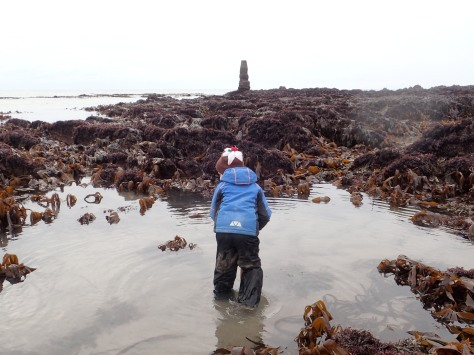 Cornish Rock Pools Junior searches for stalked jellyfish at Portwrinkle