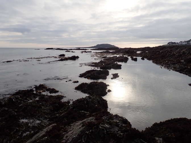 Winter Solstice Rock Pooling