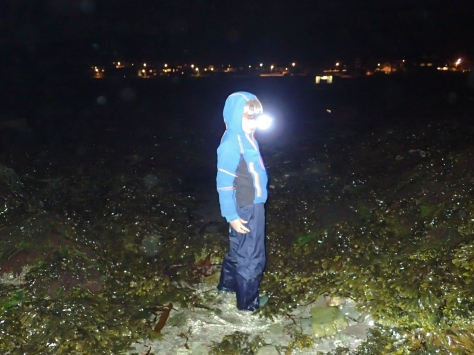 Head torch at the ready - night time rock pooling is a perfect adventure