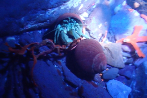 Hermit crabs are more active at night, every pool is teeming with them