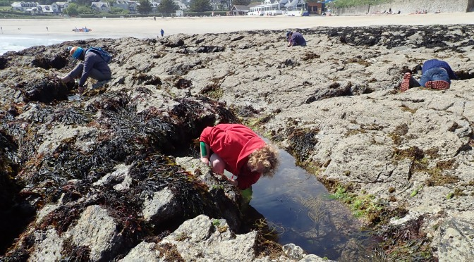 Rock pooling at Gyllingvase beach, Falmouth