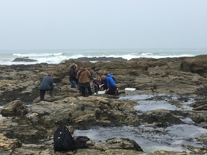 Cornish Rock Pools on Countryfile