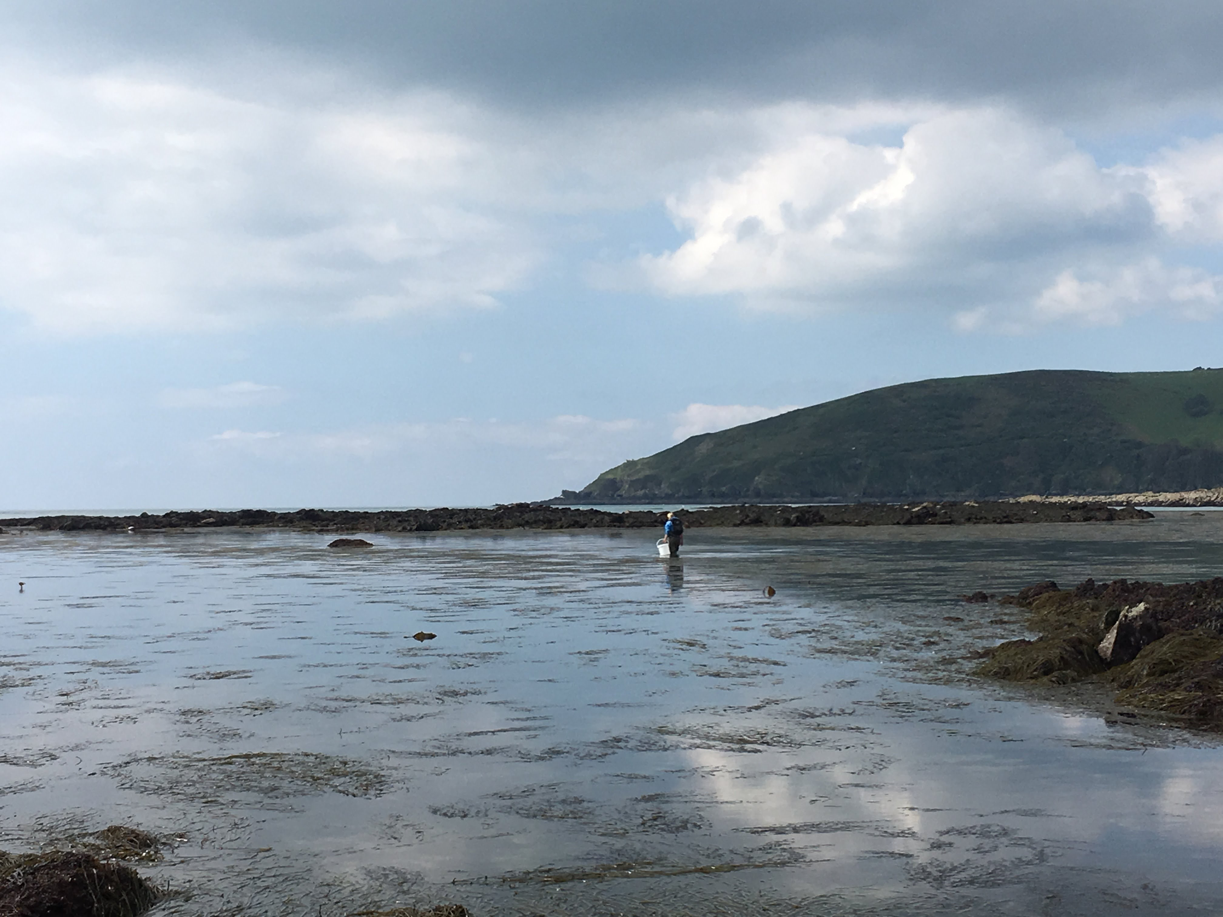Searching in vain for spiny starfish and baby bull huss/cat sharks at Hannafore