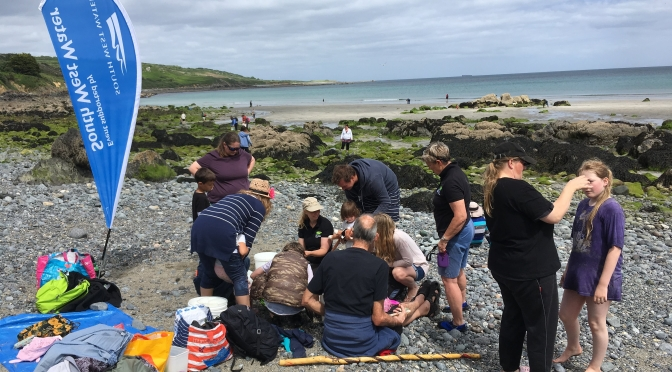 Rock Pooling at Coverack with Wildlife Watch