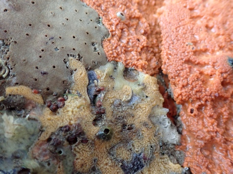 The overhang is coated in animal life including sponges, sea squirts and barnacles.