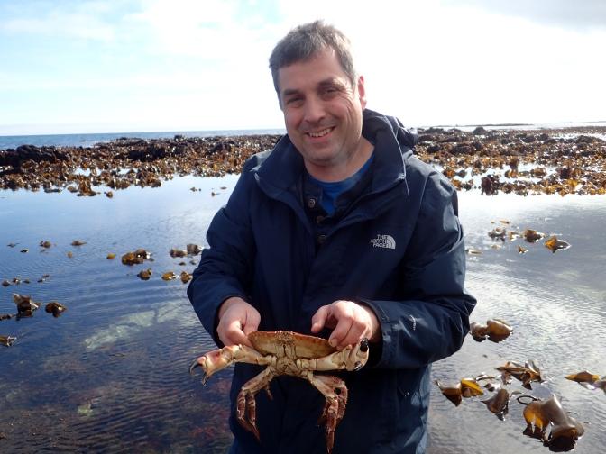 Edible crab at Prisk Cove