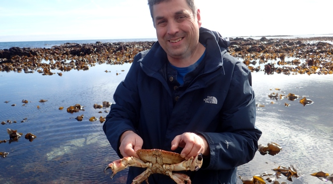 Edible crab at Prisk Cove