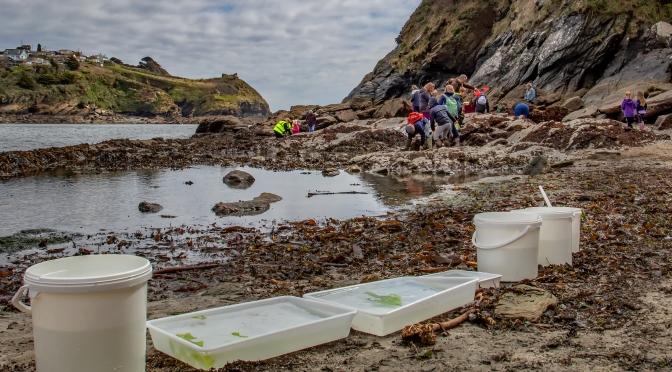 Wildlife Watch group explores Readymoney Cove. Photo courtesy of Liz Barker.