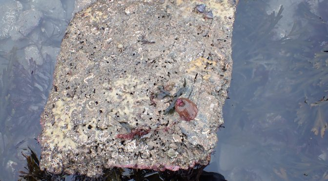 The Surprising Mini-World of Rock Pool Insects