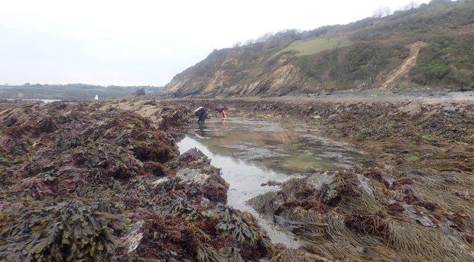 Team Rock Pooling Near Falmouth