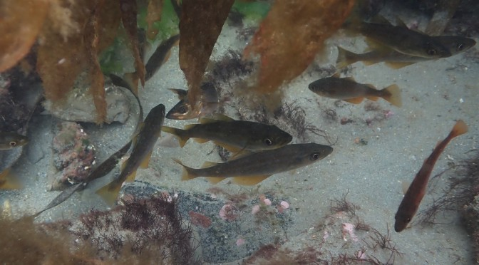 paddle–swimming And fish-whispering: Summer rock pooling in Cornwall